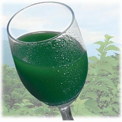 桑の葉青汁