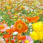 腸内フローラ お花畑イメージ
