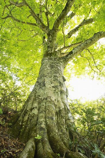 樹木のイメージ