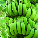 青バナナイメージ