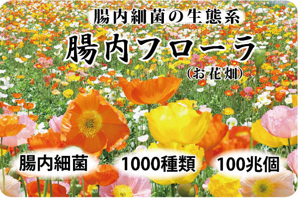 腸内フローラ 腸内細菌の生態系 腸内細菌 1000種類 100兆個 フローラとはお花畑