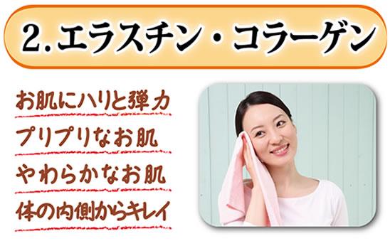 2.エラスチン・コラーゲン お肌にハリと弾力 プリプリなお肌 やわらかなお肌 体の内側からキレイ